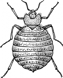 הדברת טרמיטים במשקוף